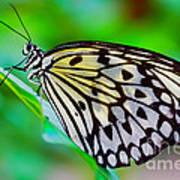 Butterfly On A Leaf Art Print