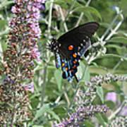 Butterfly On Bush Art Print