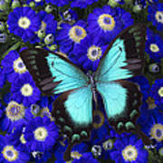 Butterfly On Cineraria Art Print