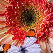 Butterfly On Daisy Art Print