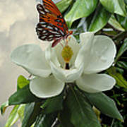 Butterfly On Magnolia Blossom Art Print
