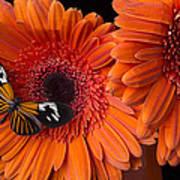 Butterfly On Orange Mums Art Print by Garry Gay