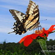 Butterfly On Red Daisy Art Print