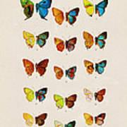 Butterfly Plate Art Print