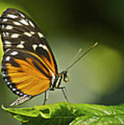 Butterfly Profile Art Print