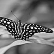 Butterfly Resting Art Print
