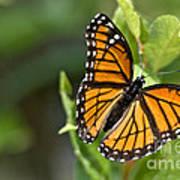 Butterfly Scene Art Print