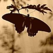 Butterfly Silhouette Art Print
