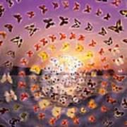 Butterfly Sunset Art Print