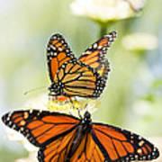 Butterfly Trio Art Print