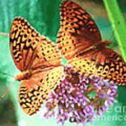 Butterfly Twins Art Print