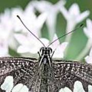 Butterfly View Art Print