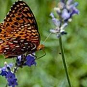 Butterfly Visit Art Print