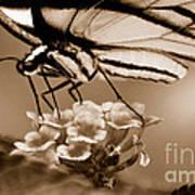 Butterfly Whisper Art Print