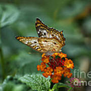 Butterfly Wings Of Sun Light Art Print