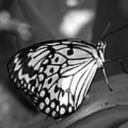 Butterfly7 Art Print
