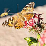 Butterfly's Friend Art Print