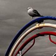 Bw Gull On Rwb Art Print