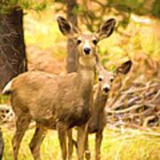 By Mama's Side - Photo Manipulation - Mule Deer - Casper Mountain - Casper Wyoming Art Print