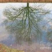 C And O Canal Tree Reflection Art Print
