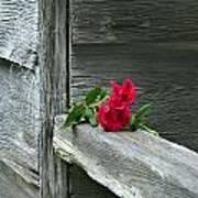 Cabin Rose Art Print