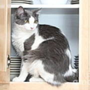 Cabinet Cat Art Print