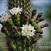 Cacti Bouquet  Art Print