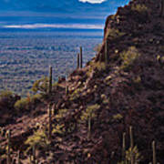 Cacti Covered Rock At Tucson Mountains Art Print