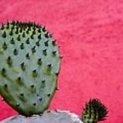 Cactus And Pink Wall Art Print