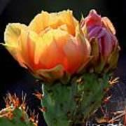 Cactus Blossom Art Print