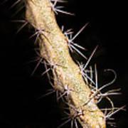 Cactus Branch Art Print