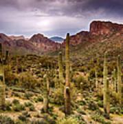 Cactus Canyon  Art Print