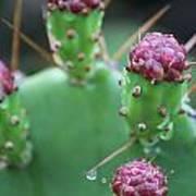 Cactus Dew Art Print