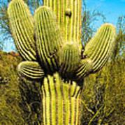 Cactus Face Art Print