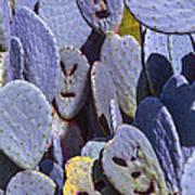 Cactus Faces Art Print