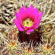 Cactus Flower Palm Springs Art Print
