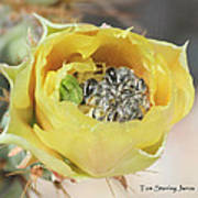 Cactus Flower With Ball Of Bees Art Print