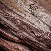 Cactus In Red Rocks Art Print