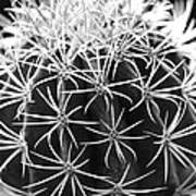 Cactus Thorn Pattern Art Print