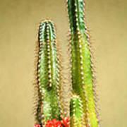 Cactus Towers Art Print