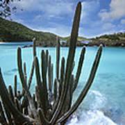 Cactus Trunk Bay  Virgin Islands Art Print
