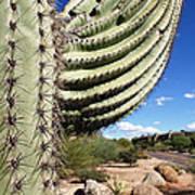 Cactus View Art Print