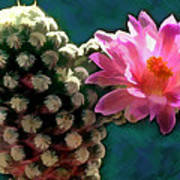 Cactus With Pink Sunlit Bloom Art Print