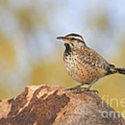 Cactus Wren On Rock Art Print