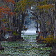 Caddo Lake Morning Print by Snow White