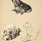 Cairn, Sealyham And Bull Terrier, 1930 Art Print