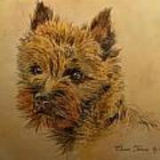 Cairn Terrier Dog Art Print