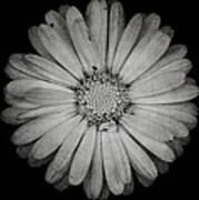 Calendula Flower - Textured Version Art Print