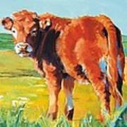 Calf Art Print