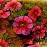 Calibrachoa Photoart I  Art Print